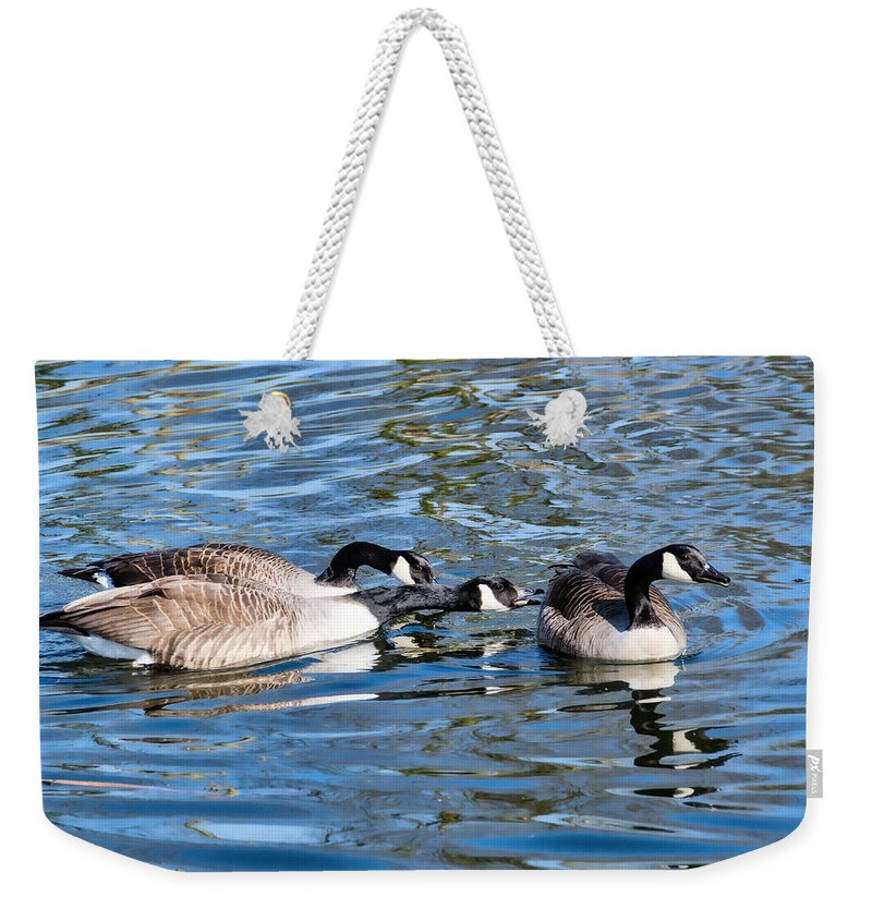 Birds Weekender Tote Bag featuring the photograph Three's A Crowd by Susie Peek