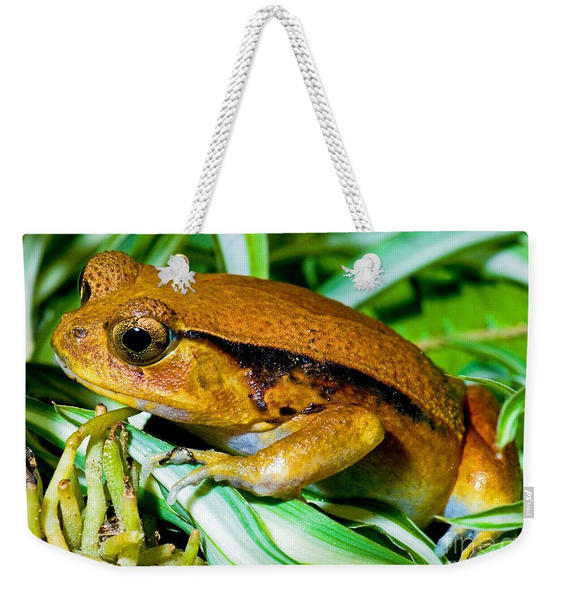Wildlife Weekender Tote Bag featuring the photograph Tomato Frog by Millard H. Sharp