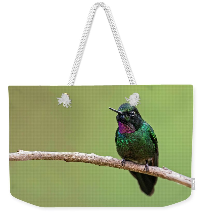 Bird Weekender Tote Bag featuring the photograph Tourmaline Sunangel by Juan Jose Arango