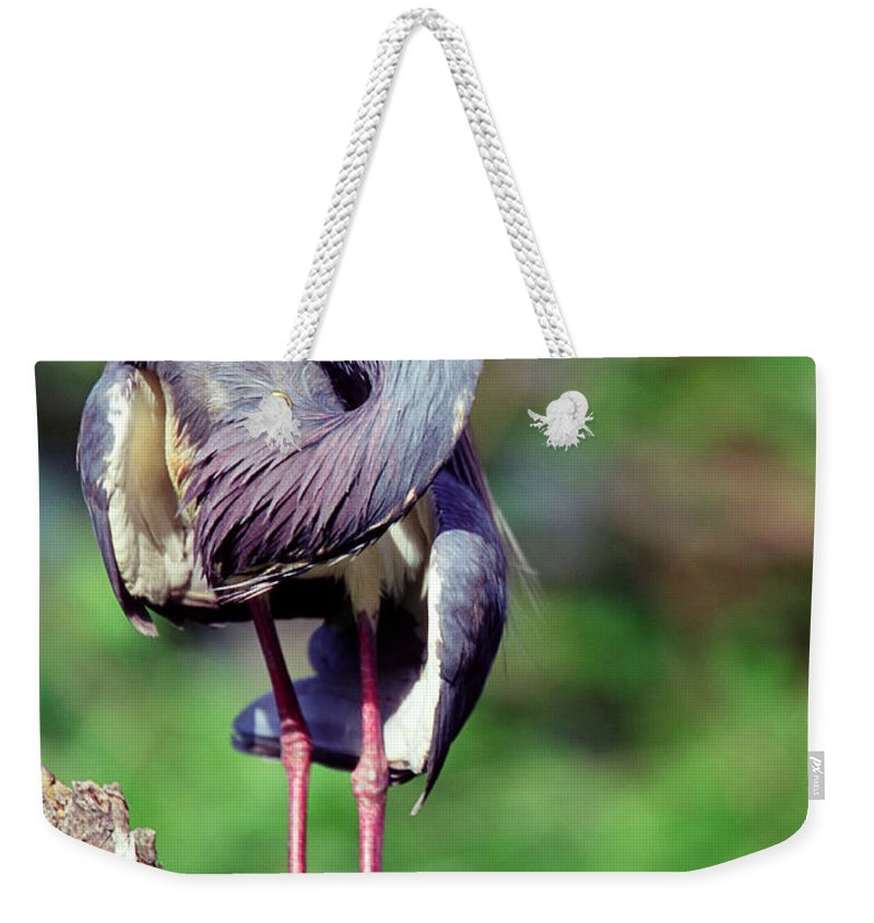 Animal Weekender Tote Bag featuring the photograph Tricolored Heron In Breeding Plumage by Millard H. Sharp