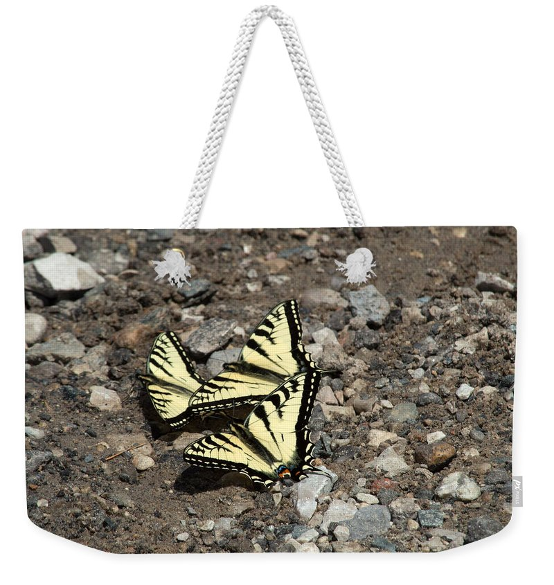 Swallowtail Weekender Tote Bag featuring the photograph Trio by Linda Kerkau