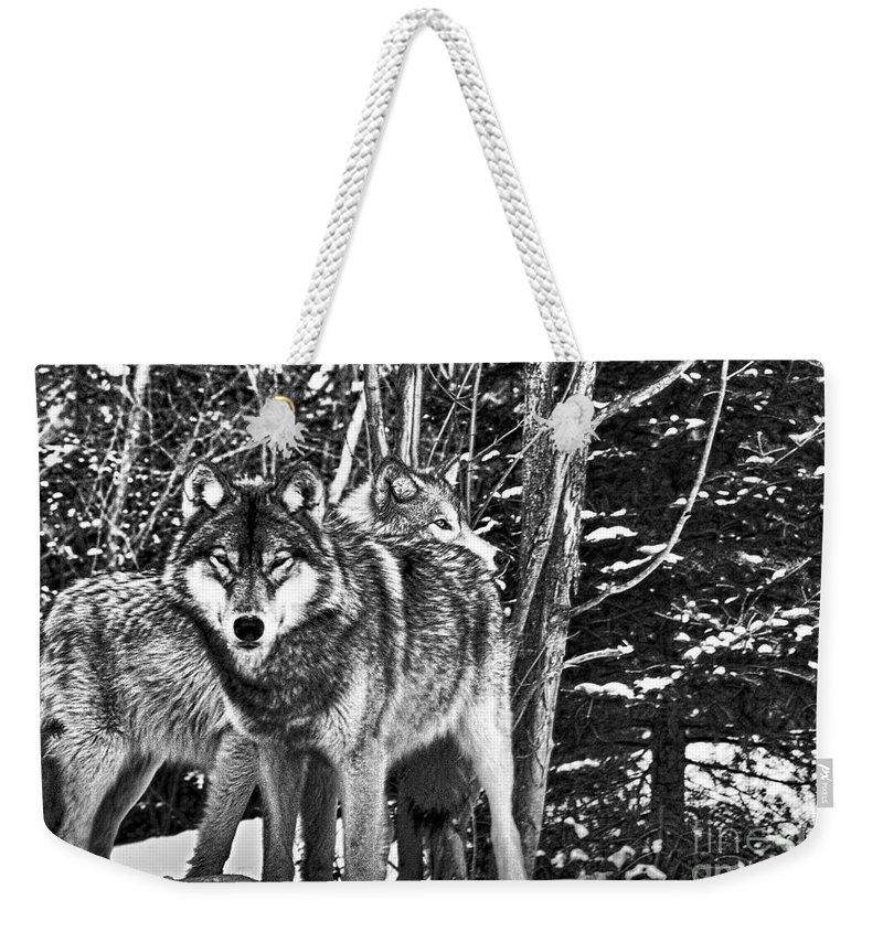 Two Weekender Tote Bag featuring the photograph Two Gray Wolves by Les Palenik