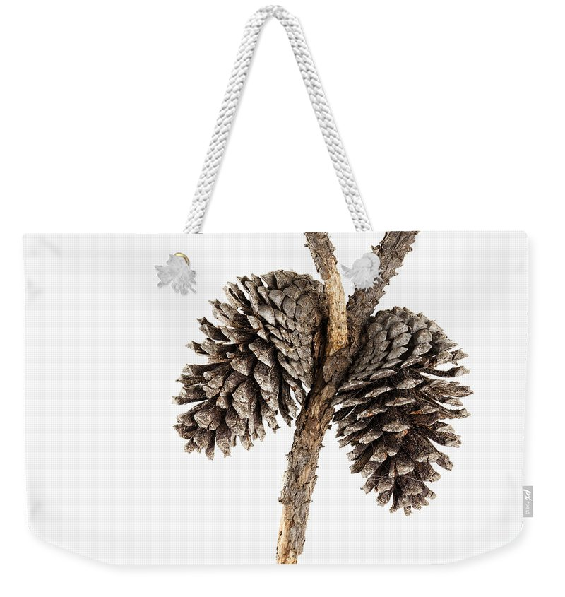 Highkey Weekender Tote Bag featuring the photograph Two Pine Cones One Twig by Carol Leigh
