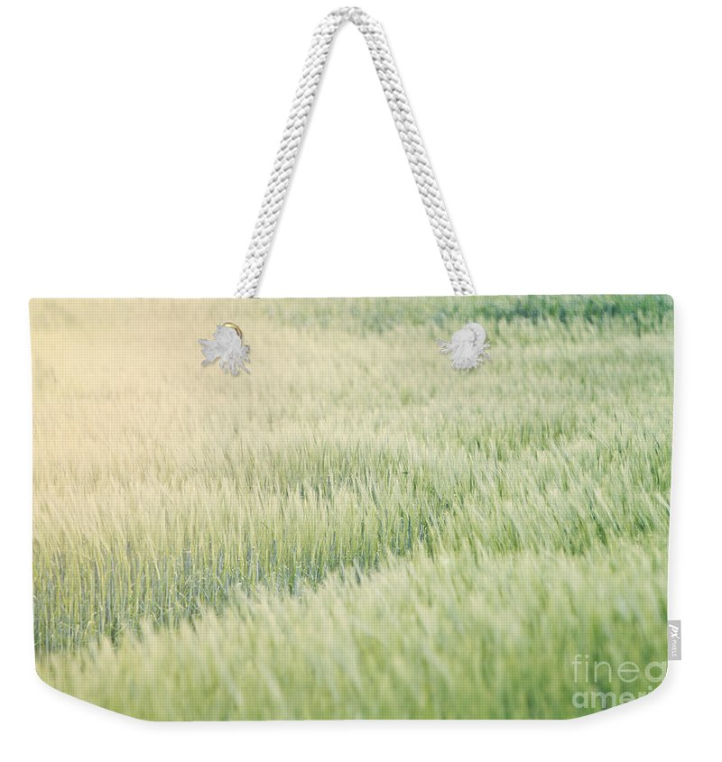 Agricultural Weekender Tote Bag featuring the photograph Wheat Field by Dan Radi