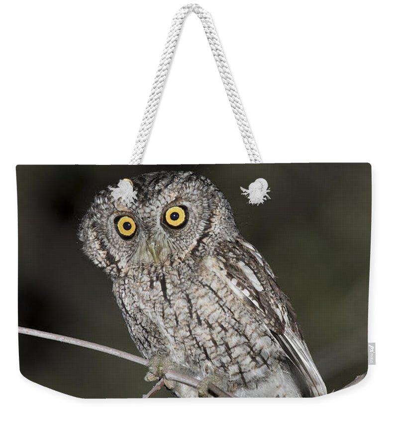 Whiskered Screech Owl Weekender Tote Bag featuring the photograph Whiskered Screech Owl by Anthony Mercieca