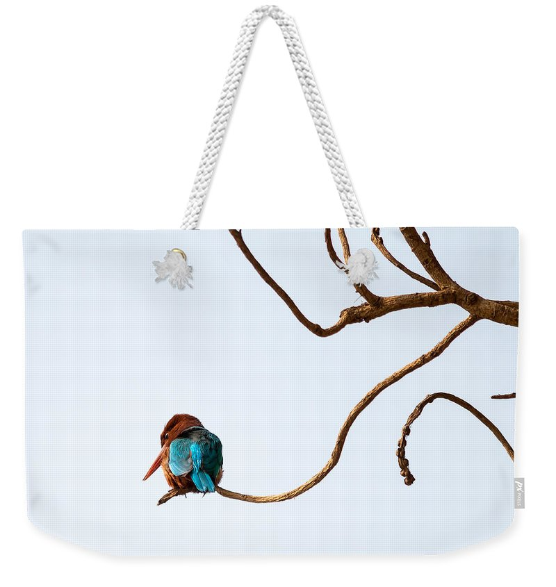 Smyrna Kingfisher Weekender Tote Bag featuring the photograph White-throated Kingfisher by Gaurav Singh