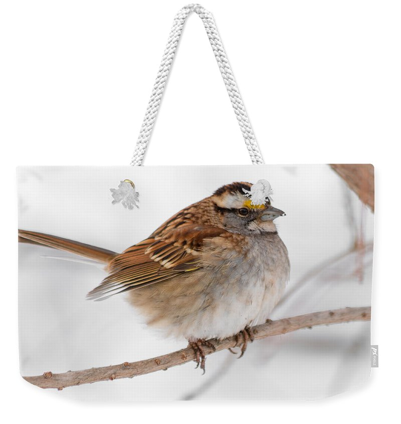Sparrow Weekender Tote Bag featuring the photograph White-throated Sparrow by Gaurav Singh