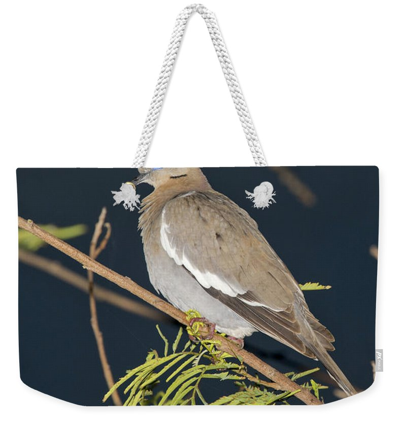 White-winged Dove Weekender Tote Bag featuring the photograph White-winged Dove by Anthony Mercieca