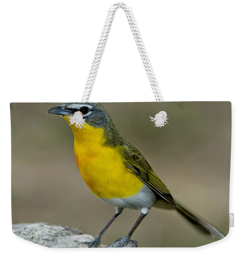 Yellow-breasted Chat Weekender Tote Bag featuring the photograph Yellow-breasted Chat by Anthony Mercieca
