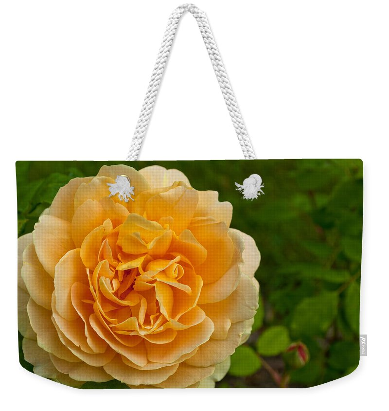 Birthday Weekender Tote Bag featuring the photograph Yellow Rose by Tikvah's Hope