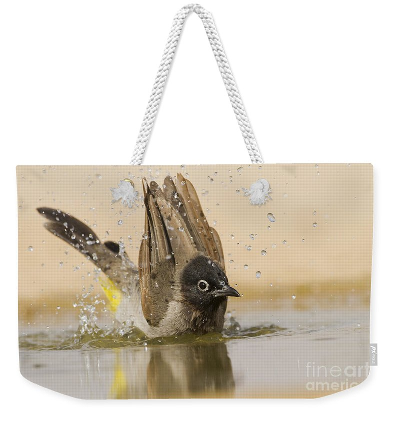 Ornithology Weekender Tote Bag featuring the photograph Yellow-vented Bulbul by Eyal Bartov