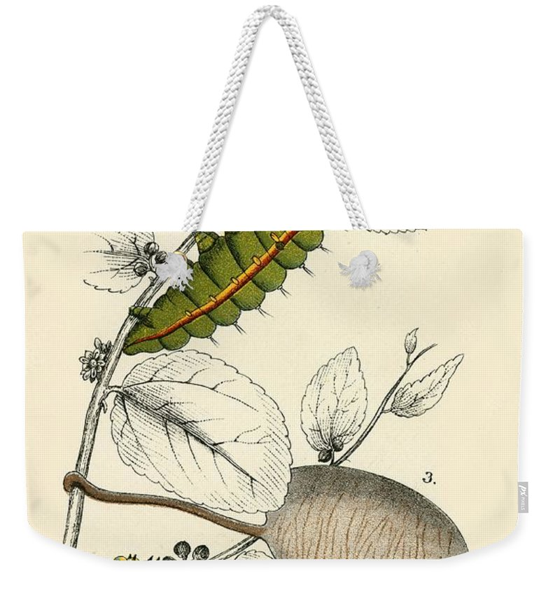 Insect Weekender Tote Bag featuring the painting Butterflies by English School