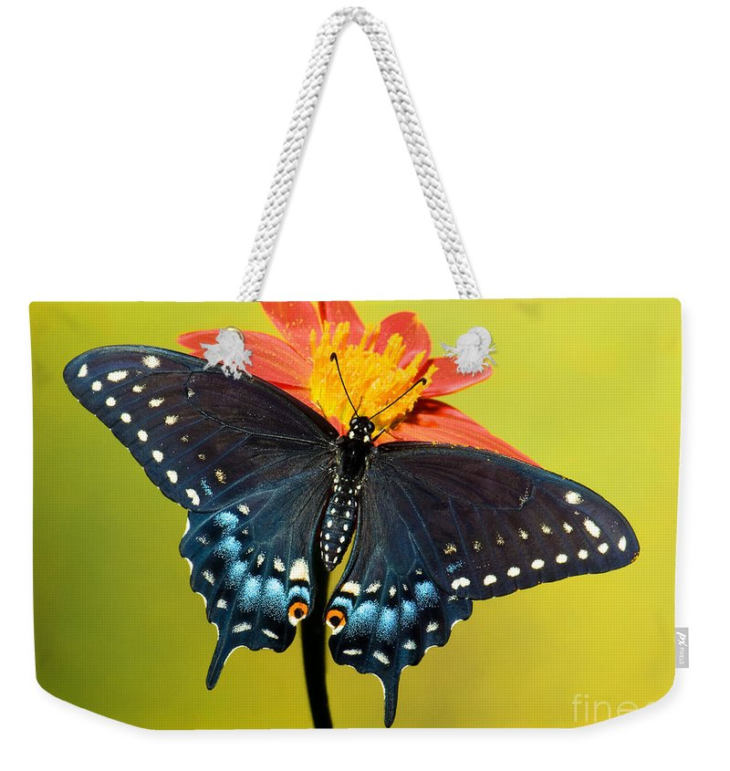 Nature Weekender Tote Bag featuring the photograph Eastern Black Swallowtail Butterfly by Millard H. Sharp