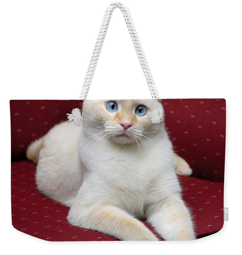 Blue Eyes Weekender Tote Bag featuring the photograph Flame Point Siamese Cat by Amy Cicconi