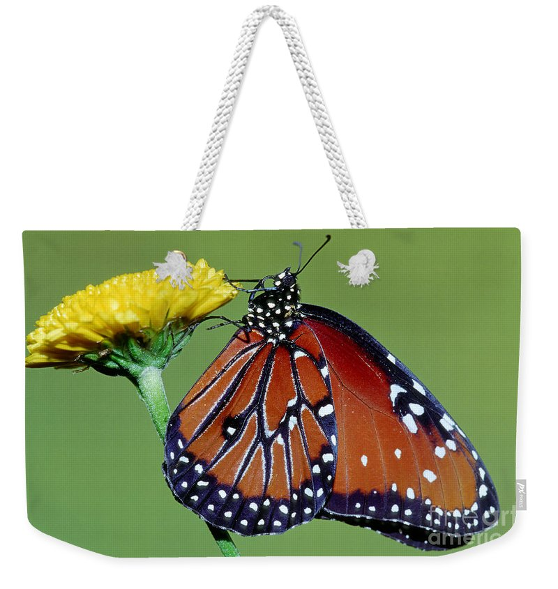 Fauna Weekender Tote Bag featuring the photograph Queen Butterfly by Millard H. Sharp