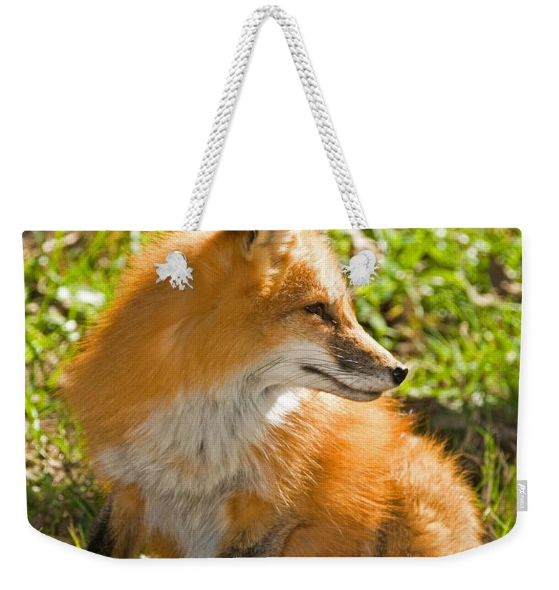 Red Fox Weekender Tote Bag featuring the photograph Red Fox by Millard H. Sharp