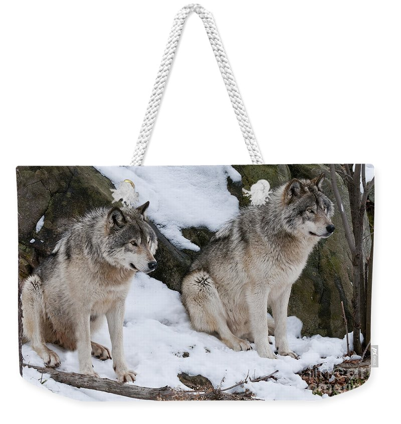 Timber Wolf Photography Weekender Tote Bag featuring the photograph Timber Wolves by Wolves Only