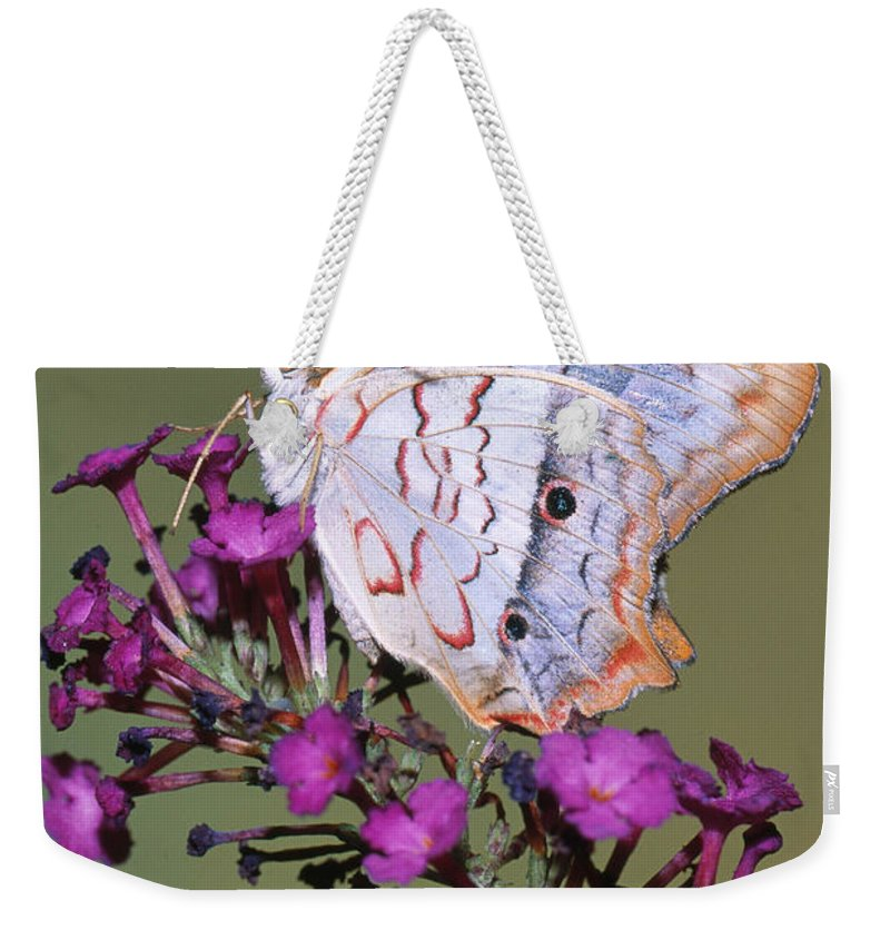 Fauna Weekender Tote Bag featuring the photograph White Peacock Butterfly by Millard H. Sharp