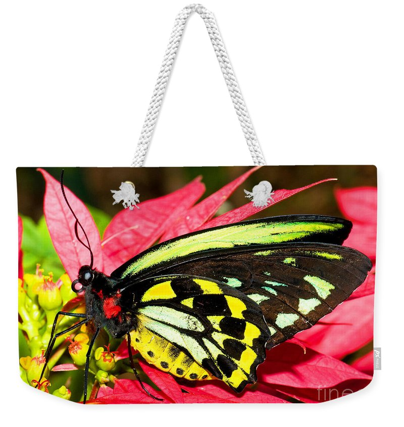 Tropical Butterfly Weekender Tote Bag featuring the photograph Cairns Birdwing Butterfly by Millard H. Sharp