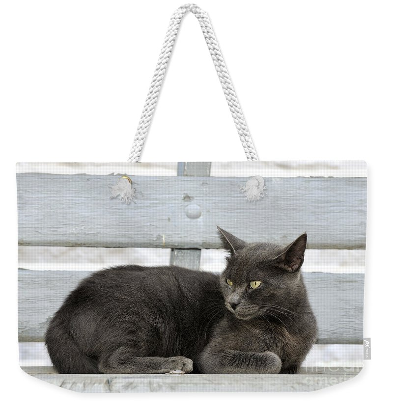Cat; Cats; Feline; Tabby; Animal; Sit; Sitting; Rest; Resting; Bench; Free; Alone; Greece; Hellas; Greek; Hellenic; Hydra; Argosaronic; Saronic; Gulf; Islands; Island; Holidays; Vacation; Travel; Trip; Voyage; Journey; Tourism; Touristic; Yellow; Eyes; Grey Weekender Tote Bag featuring the photograph Cat In Hydra Island by George Atsametakis