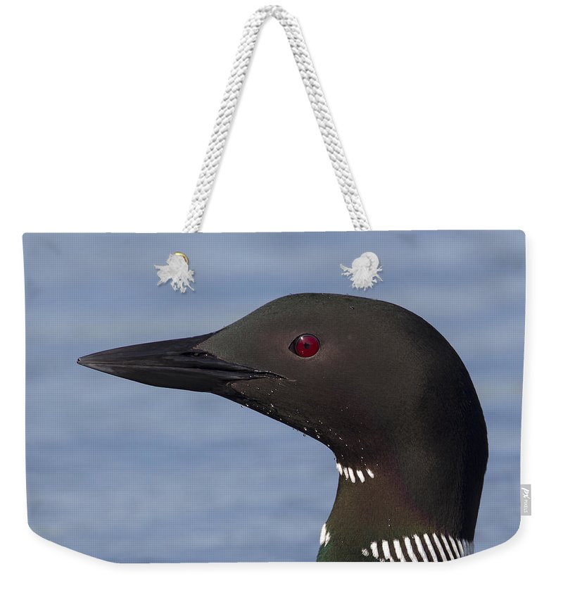 Doug Lloyd Weekender Tote Bag featuring the photograph Common Loon by Doug Lloyd