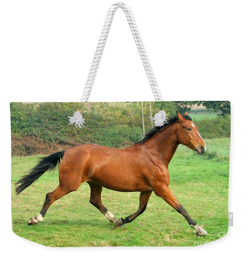Grey Horse Weekender Tote Bag featuring the photograph The Bay Horse by Angel Ciesniarska