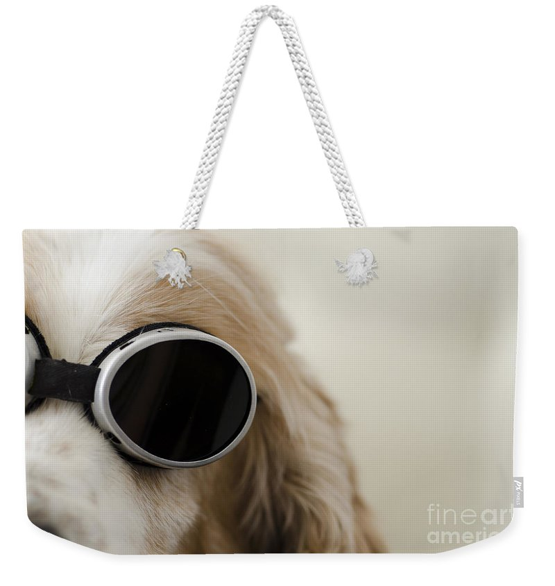 Dog Weekender Tote Bag featuring the photograph Dog by Mats Silvan