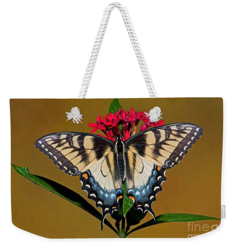 Animal Weekender Tote Bag featuring the photograph Eastern Tiger Swallowtail Butterfly by Millard H. Sharp