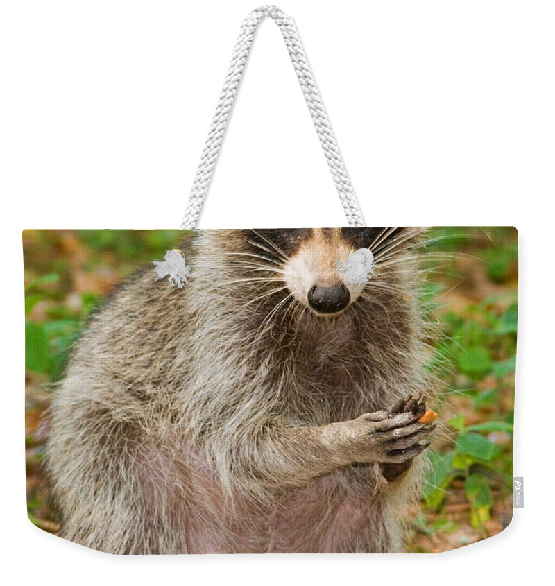 Raccoon (procyon Lotor) Weekender Tote Bag featuring the photograph Raccoon by Millard H. Sharp