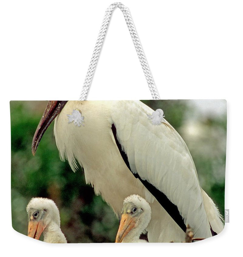 Wood Stork Weekender Tote Bag featuring the photograph Wood Storks by Millard H. Sharp