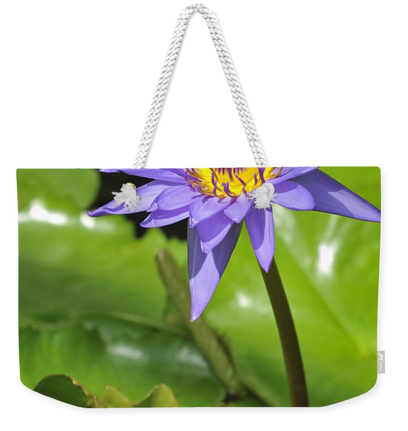 Nymphaea Director G.t Moore Weekender Tote Bag featuring the photograph 120520p014 by Arterra Picture Library