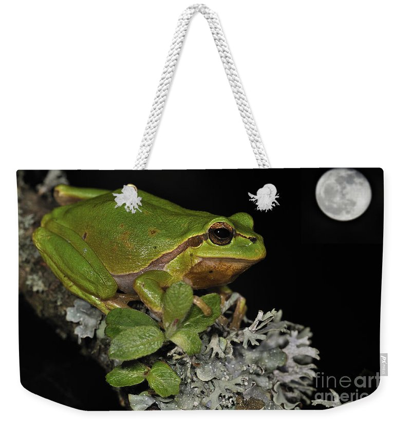 European Tree Frog Weekender Tote Bag featuring the photograph 120520p062 by Arterra Picture Library