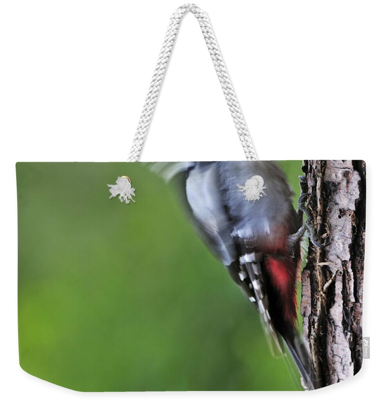 Foraging Weekender Tote Bag featuring the photograph 120520p267 by Arterra Picture Library