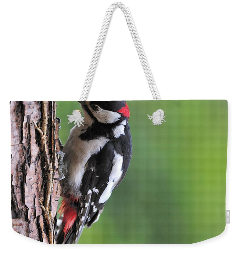 Great Spotted Woodpecker Weekender Tote Bag featuring the photograph 120520p269 by Arterra Picture Library