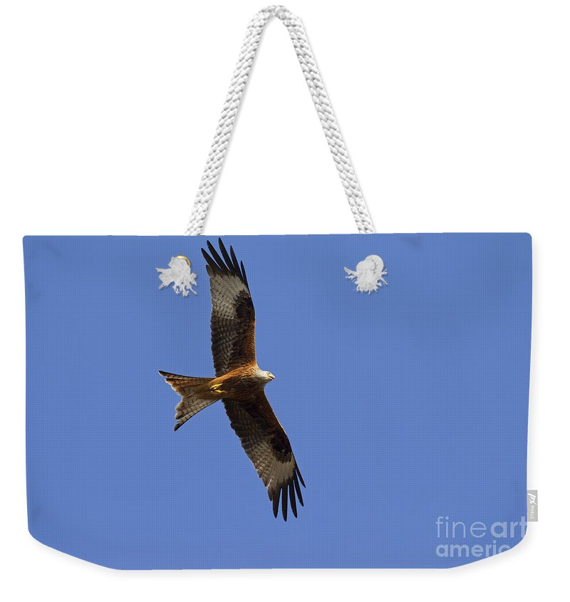 Germany Weekender Tote Bag featuring the photograph 120520p327 by Arterra Picture Library