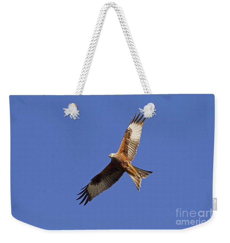 Germany Weekender Tote Bag featuring the photograph 120520p328 by Arterra Picture Library