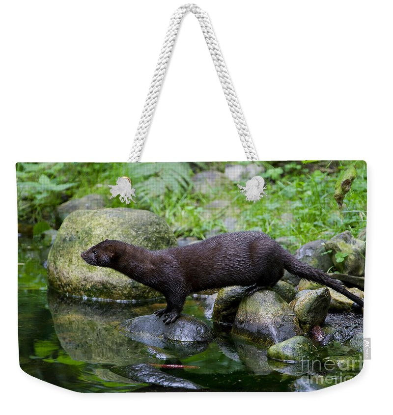 American Mink Weekender Tote Bag featuring the photograph 121213p013 by Arterra Picture Library