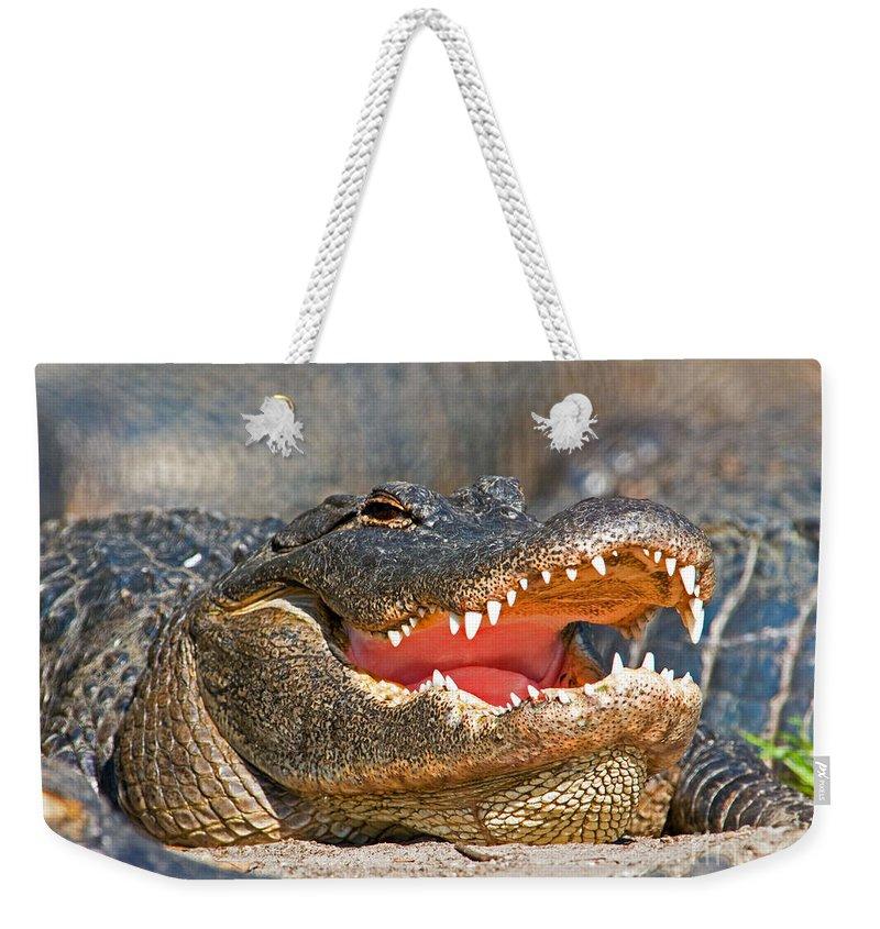 Alligator Weekender Tote Bag featuring the photograph American Alligator by Millard H. Sharp