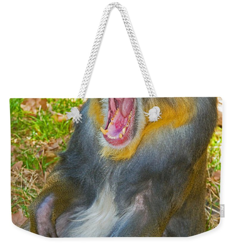 Nature Weekender Tote Bag featuring the photograph Mandrill by Millard H. Sharp