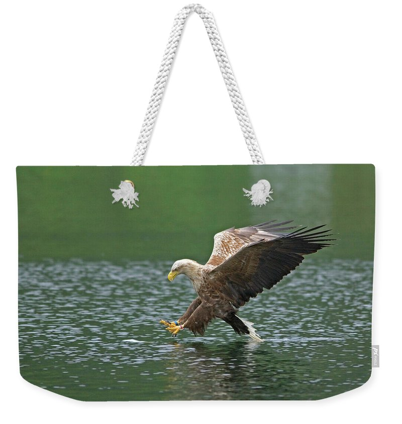 Bird Weekender Tote Bag featuring the photograph White-tailed Sea Eagle In Norway by Fritz Polking - Vwpics
