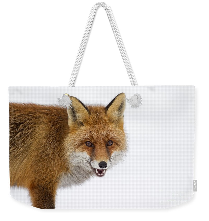 Red Fox Weekender Tote Bag featuring the photograph 130201p058 by Arterra Picture Library