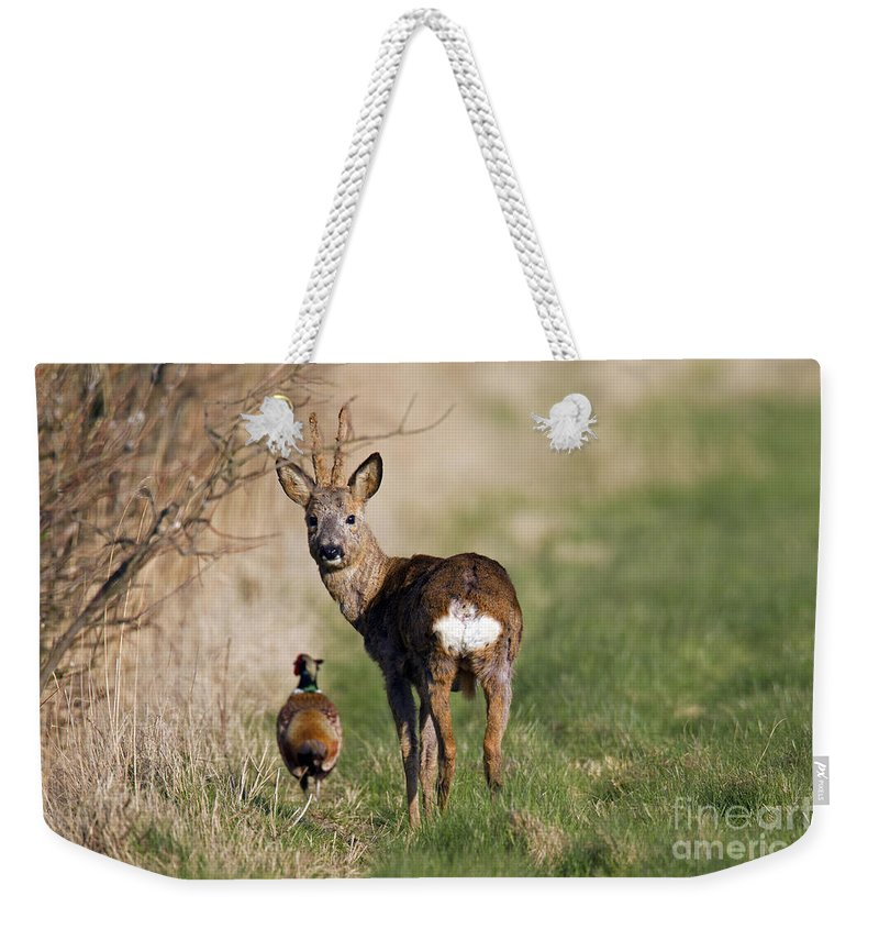 Common Pheasant Weekender Tote Bag featuring the photograph 130201p187 by Arterra Picture Library