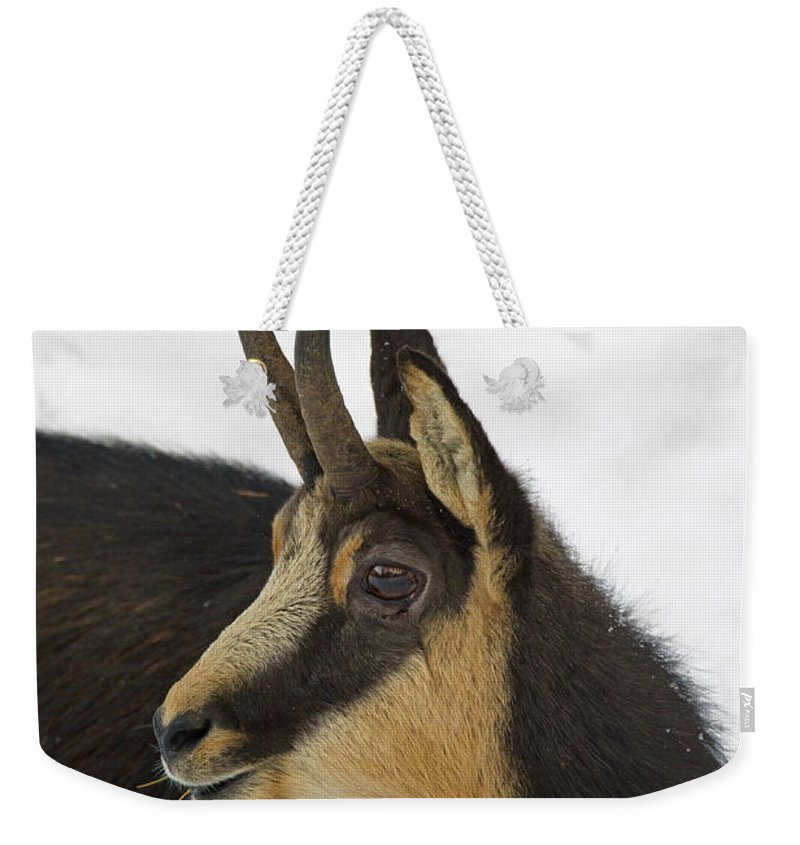 Chamois Weekender Tote Bag featuring the photograph 130201p201 by Arterra Picture Library