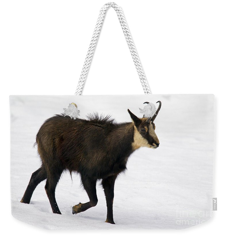 Chamois Weekender Tote Bag featuring the photograph 130201p218 by Arterra Picture Library