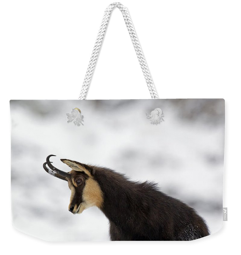 Chamois Weekender Tote Bag featuring the photograph 130201p229 by Arterra Picture Library