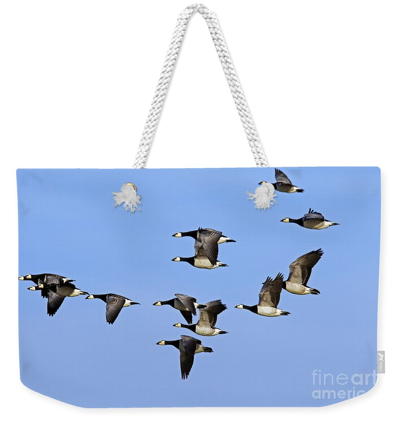 Barnacle Goose Weekender Tote Bag featuring the photograph 130215p251 by Arterra Picture Library