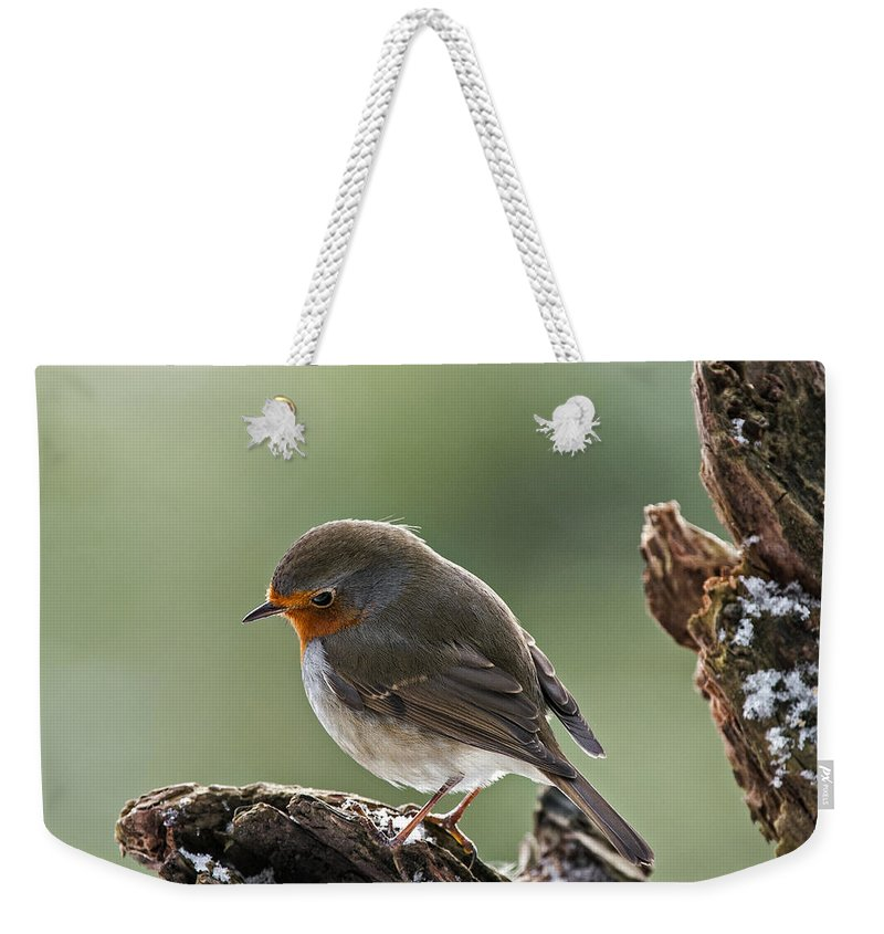 European Robin Weekender Tote Bag featuring the photograph 130215p300 by Arterra Picture Library