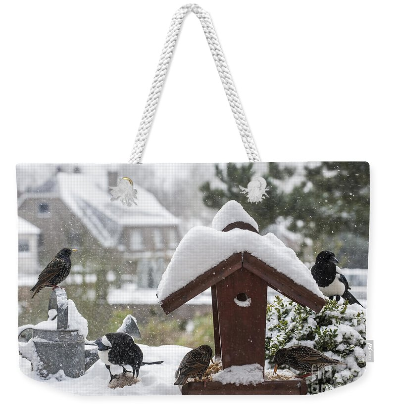Common Starling Weekender Tote Bag featuring the photograph 130215p304 by Arterra Picture Library