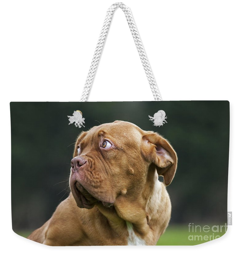 Dogue De Bordeaux Weekender Tote Bag featuring the photograph 130318p080 by Arterra Picture Library