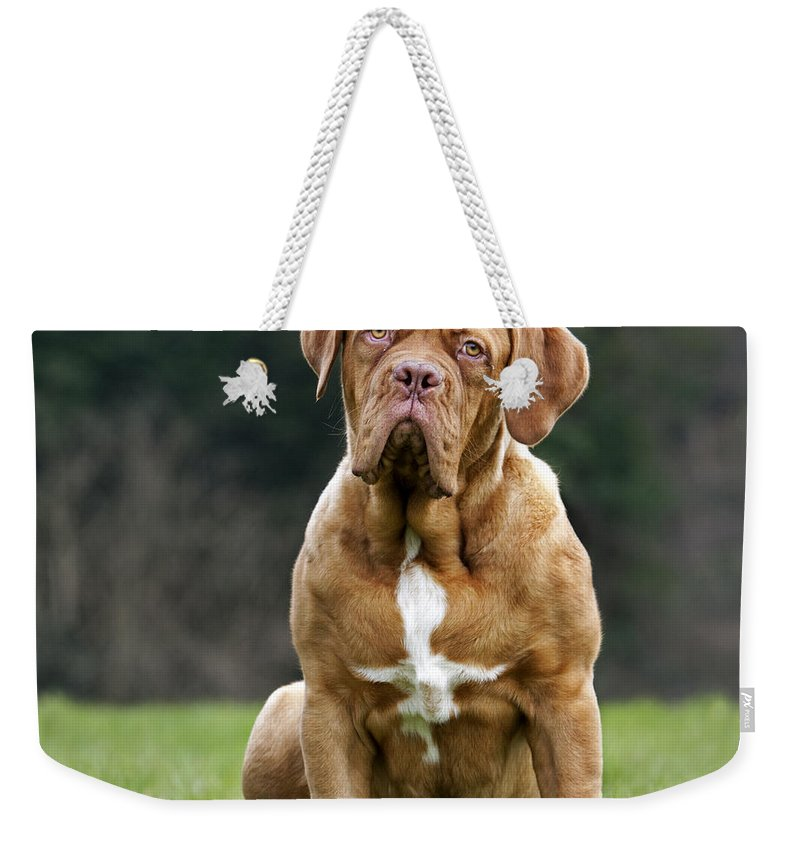 Dogue De Bordeaux Weekender Tote Bag featuring the photograph 130318p082 by Arterra Picture Library
